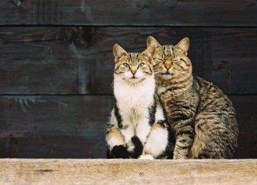 Mačke
