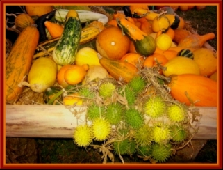 Plodovi